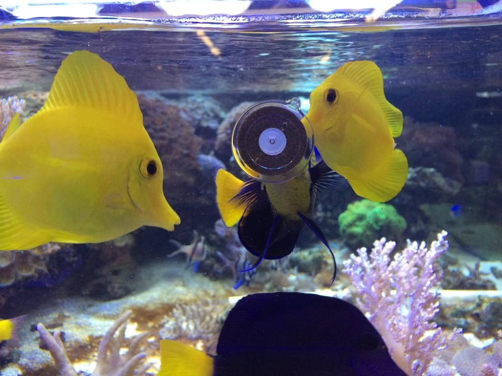 Vitalis Mini Marine Grazer Algen Futterringe