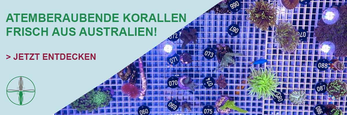 Neue Korallen