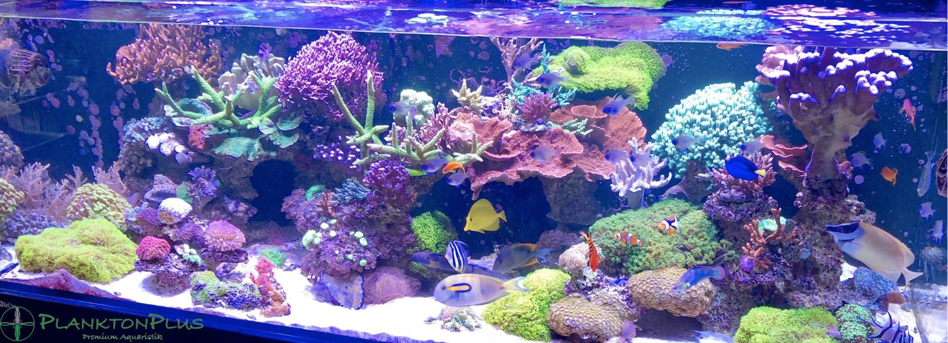 PlanktonPlus Aquaristik
