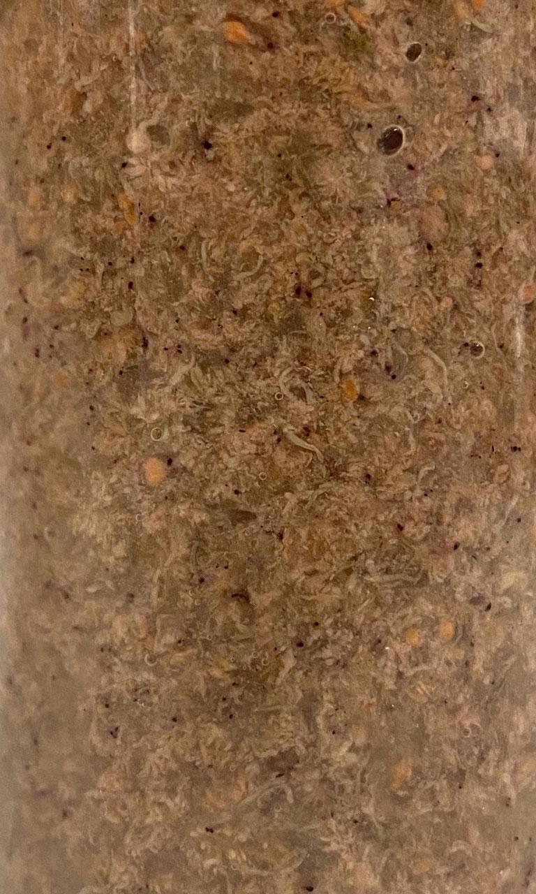 PlanktonPlus Ocean Artemia