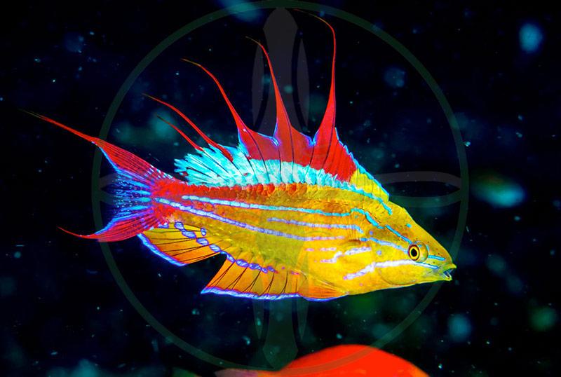 PlanktonPlus Fische